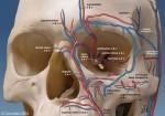 blood-vessels-around-the-eye-1024x718